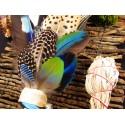 Eventail plumes à fumigation plumes cobeau et faisan et aqua aura quartz